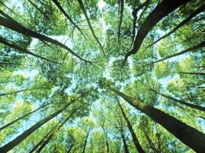 Hutan Pinus Imogiri (1)