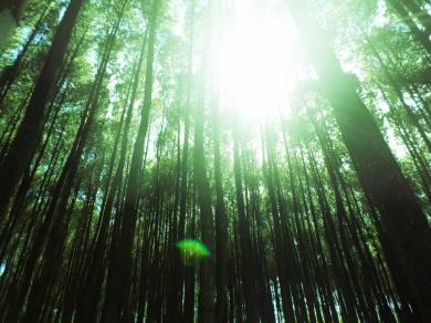 Hutan Pinus Imogiri (4)