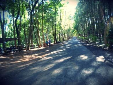 Jalan Hutan Pinus Imogiri