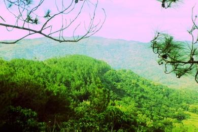 view dari gardu pohon kedua