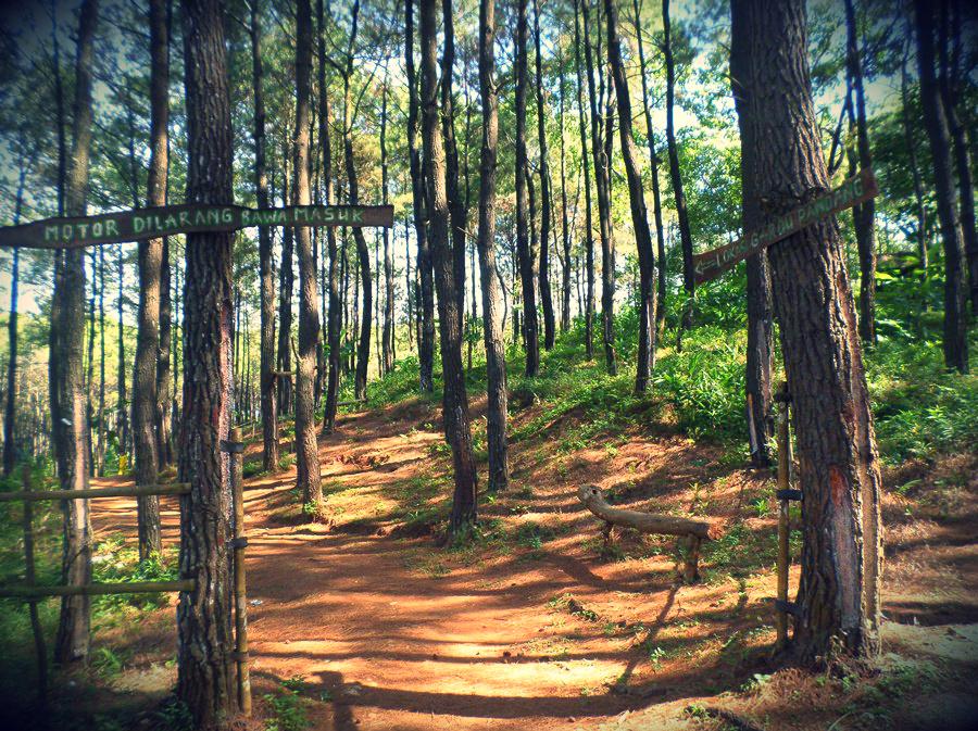 Melihat Keindahan Alam Jogja dari Ketinggian di Hutan Pinus Becici | Catatan Kecil **SiMpLe N Easy**