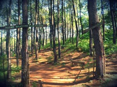 Hutan Pinus Becici