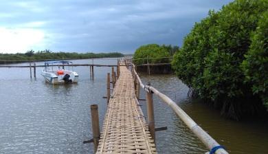 Hutan mangrove pantai congot pasir mendit (4)