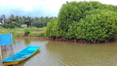 Hutan Mangrove Pantai Congot (Pasir Mendit) Kulon Progo | Catatan Kecil **SiMpLe N Easy**
