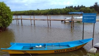 Hutan mangrove pantai congot pasir mendit (6)