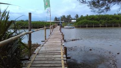 Hutan mangrove pantai congot pasir mendit (8)