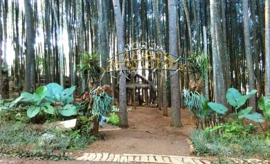 Hutan Pinus Mangunan 2016 (1)