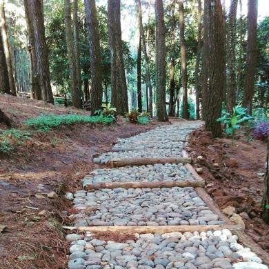 Hutan Pinus Mangunan 2016 (4)