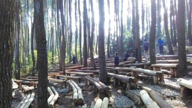 Hutan Pinus_2016 (2)