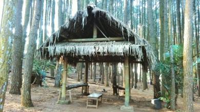 Hutan Pinus_2016 (6)
