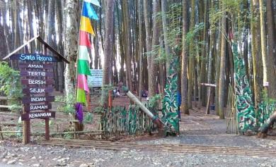 Hutan Pinus_2016 (7)
