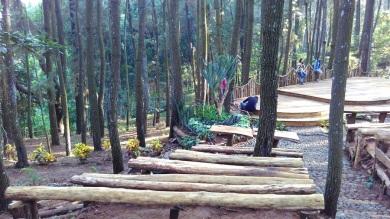 Hutan Pinus_2016 (8)